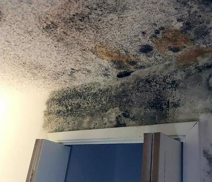 Mold Damage Remediation In White River Junction Before
