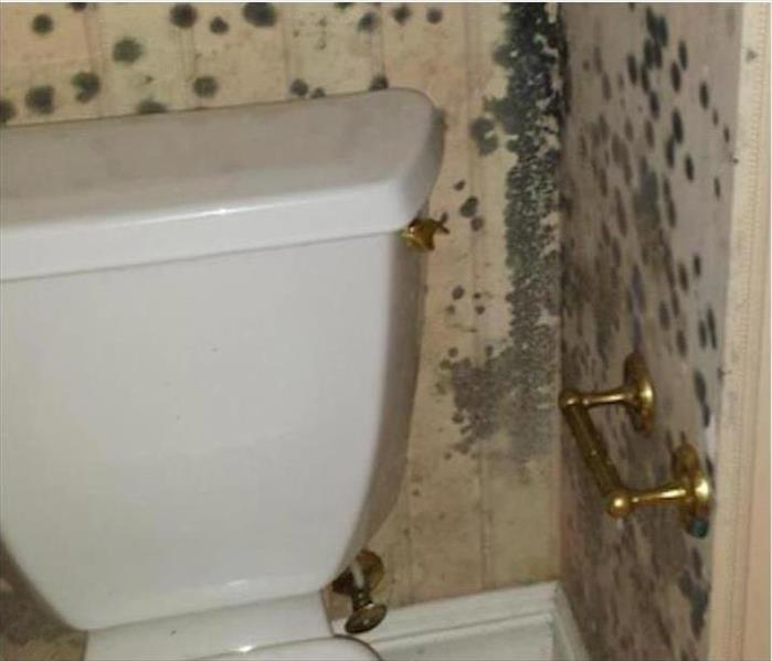 Moldy Powder Room in White River Junction