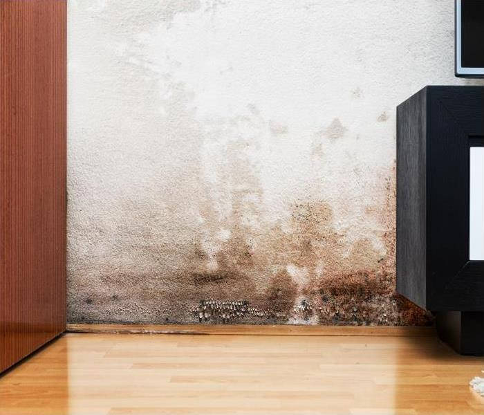 Water Damage Why You Should Pick SERVPRO When Your Wilmington Home Experiences A Water Damage Disaster