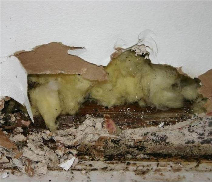 Mold Remediation Trustworthy Mold Damage Remediation in Brattleboro