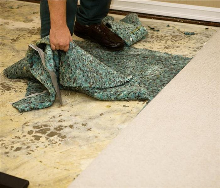 Storm Damage How SERVPRO Handles Flood Damaged Carpeting in Wilmington