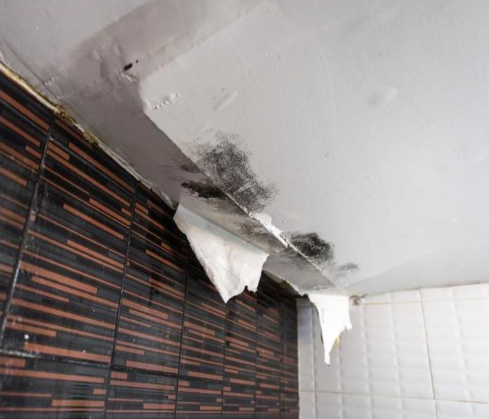 Mold Remediation Our Mold Damage Team In Wilmington Can Remove Mold In Your Home