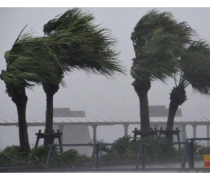 Palm trees blowing in severe wind