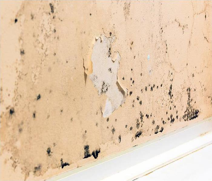 Mold Remediation Cleaning Mold Damage In Wilmington Homes