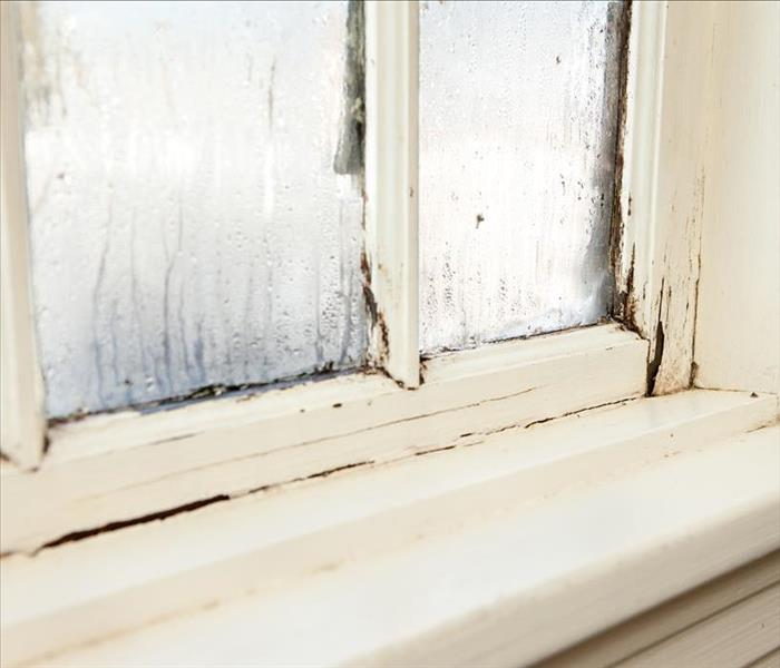 Mold Remediation Removing Unsightly Mold Damage Around Windows and Exterior Doors of Your Wilmington Residence